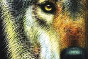 Loup I - 190x70- Sold out